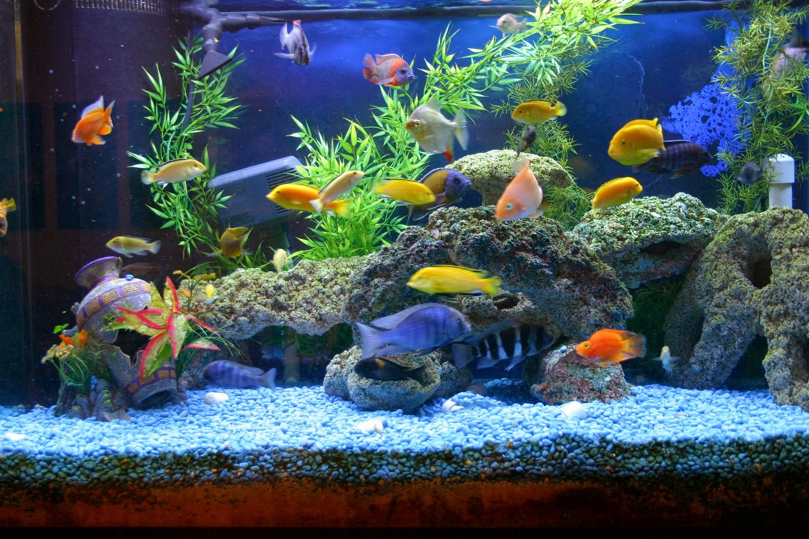 How to clean a dirty aquarium earnest foods for my soul for Split fish tank