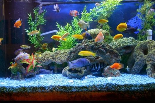 aquarium-wallpaper-4
