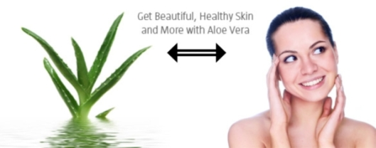 featured-article-aloe-vera1